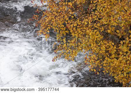 A Torrent Of Cold Water, From Which The Aragon Subordan River Is Born, As It Passes Under The Branch