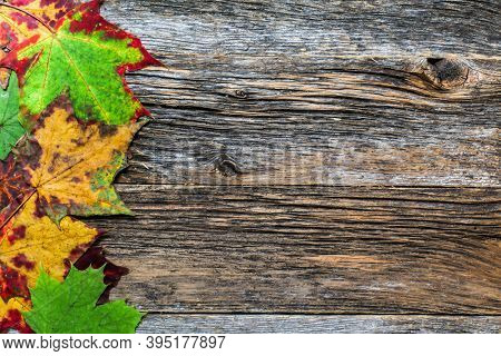 Decorative autumn background with autumn  colorful leaves