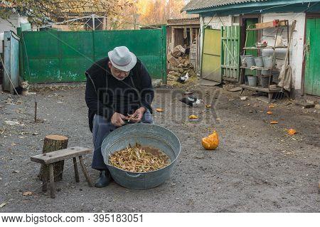 Ukrainian Peasant Manually Hulling  Haricot Harvest At The Homestead
