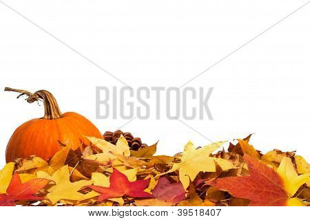 Autumn leaves with pumpkin