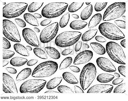 Illustration Wall-paper Of Hand Drawn Sketch Of Argan Or Argania Spinosa Seeds, Used For Cosmetic Pu