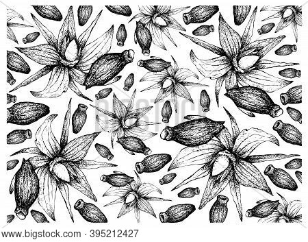 Illustration Wall-paper Of Hand Drawn Sketch Of Borage Seeds And Blossoms On Tree Branch. The Highes