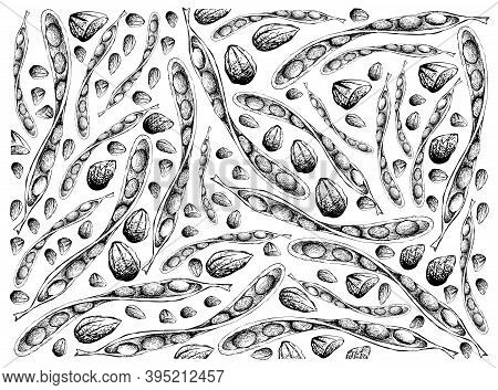 Illustration Wall-paper Background Of Hand Drawn Sketch Of Sato, Parkia Speciosa, Bitter Beans Or Tw