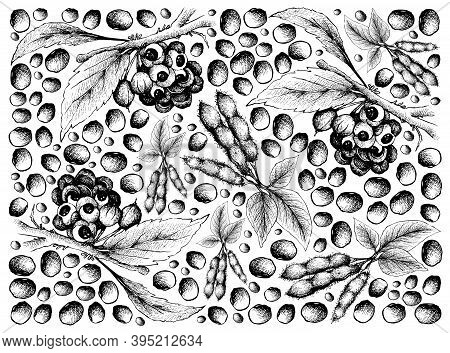 Vegetable, Illustration Wall-paper Of Hand Drawn Sketch Red Guarana Or Paullinia Cupana Fruits And S