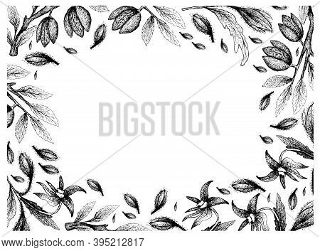 Illustration Frame Of Hand Drawn Sketch Of Borage Seeds And Almonds On White Background.