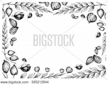Illustration Frame Of Hand Drawn Sketch Sunflower Seeds And Garbanzo Beans Or Chick Pea On White Bac
