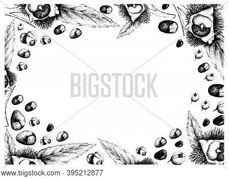 Illustration Frame Of Hand Drawn Sketch Of Japanese Chestnuts, Korean Chestnut Or Castanea Crenata A