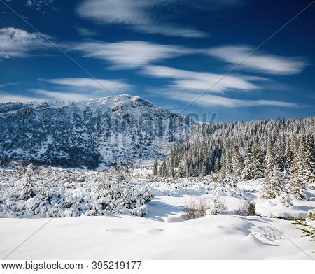 Exotic winter spruces in snow on a frosty day. Location place Carpathian mountains, Ukraine, Europe. Wintry wallpapers. Picturesque nature photography. Happy New Year! Discover the beauty of earth.