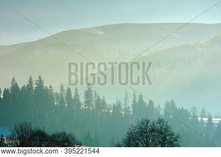 Spruce Trees On The Hill On A Foggy Morning. Beautiful Nature Scenery In Winter. Backlit Silhouettes