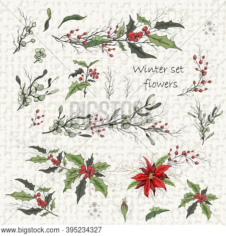 Set Of Winter Flowers (poinsettia, White Mistletoe, Holly). Realistic Hand-drawn Branches, Bouquets,