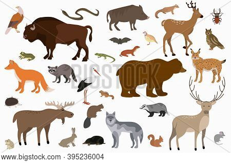 Vector Collection Of Cartoon Forest Animals And Birds