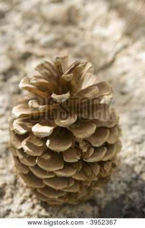 Pine Cone On A Rock