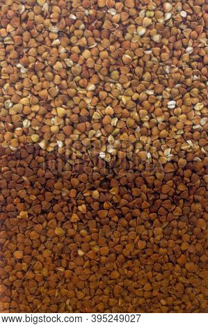 Macro Photo. Texture Background Grain Buckwheat Groats.