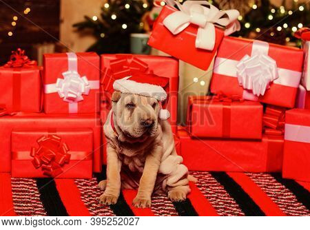 Goods For Animals. Love And Care. Wish List. Small Shar Pei Puppy. Puppy Santa Claus. Little Dog Gif