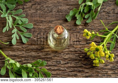 Essential Oil Bottle With Blooming Common Rue, Or Ruta Graveolens Plant On A Wooden Table