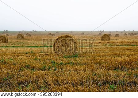 Straw Bales On The Field During Sunrise. A Field Of Straw Bales On A Foggy August Day. Roll Of Straw
