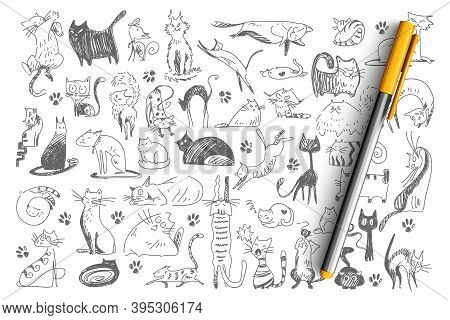 Cats Doodle Set. Collection Of Hand Drawn Childish Patterns Domesticated Animals Kitties Kitten Pets