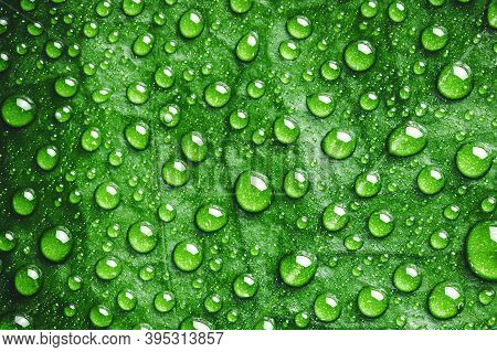 Green Leaf Water Drops. Natural Environment Background. Raindrops Morning Dew Texture.