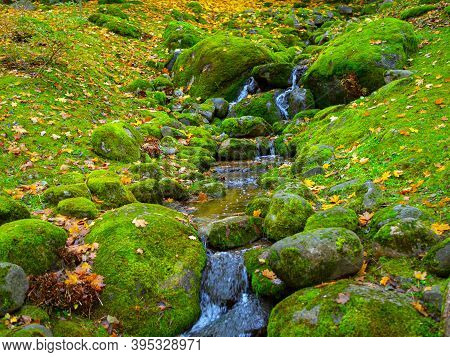 River Stream In Enchanted Serene Autumn Forest. Beautiful Autumn View Of Oirase Mountain Stream With