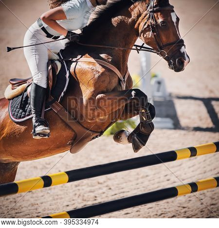 A Beautiful Bay Sports Horse With A Rider In The Saddle Jumps Over A High Yellow And Black Barrier I