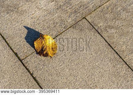 Fallen Yellow Leaf Lying On The Grey Floor