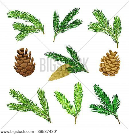 Pine Tree Evergreen Branches And Cones Vector Set