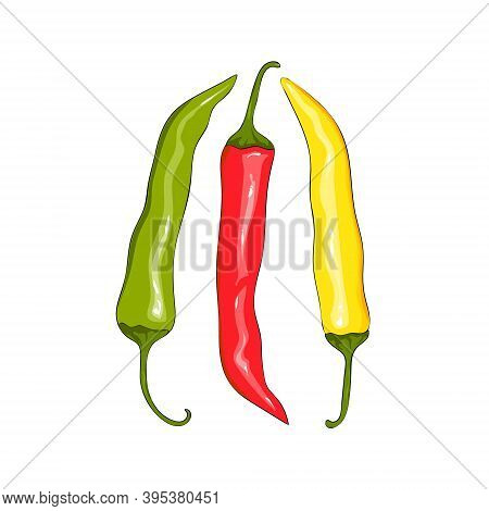 A Set Of Sharp Hot Chilli Peppers. Red Pepper, Yellow Pepper And Green Pepper. Collection Hot Chilli