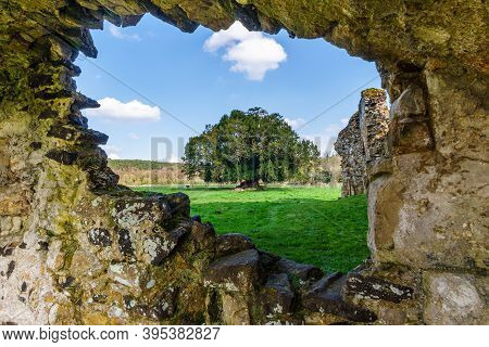 A Tree Frame By The Spectacular Ruins Of The Cistercian Waverley Abbey Founded In 1128 Near Farnham,