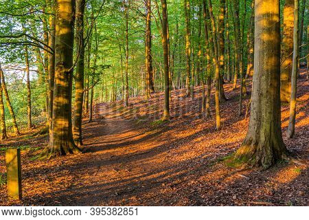 A Late Spring Day In Chantry Woods Near Guildford, Surrey With Sun Shining Through The Tree's Onto A