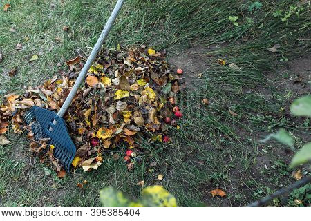 Cleaning Autumn Leaves In The Garden With A Plastic Rake. Concept Of Preparation For Winter And Comp