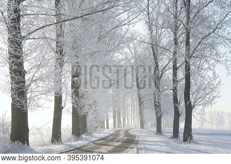 Winter road path landscape Nature background Nature background landscape Nature background Nature landscape snow landscape Nature frost trees landscape Nature landscape Nature background Nature alley landscape Nature background landscape Nature background