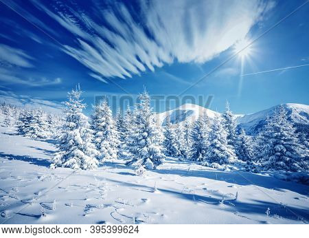 Frosty day in snowy coniferous forest. Location place Carpathian mountains, Ukraine, Europe. Splendid wintry photo wallpapers. Christmas holiday concept. Happy New Year! Discover the beauty of earth.