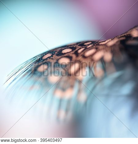 Fragment Of A Guinea Fowl's Feather Close-up On A Bright Background