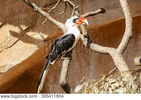 Picture Of A Von Der Deckens Hornbill Sitting On A Branch, They Are A Hornbill, Tockusckeni, Which O