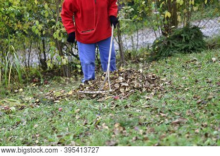 Relax By Work In The Village While Raking The Yellow Leaves In Autumn