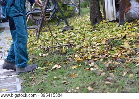 The Traditional Way Of Raking Autumn Leaves In The Garden In The Village