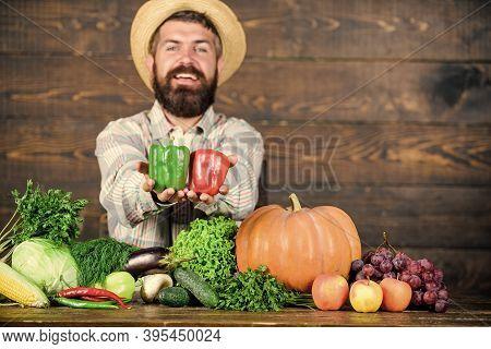 Typical Farmer Guy. Farm Market Harvest Festival. Sell Vegetables. Man Mature Bearded Farmer Hold Ve
