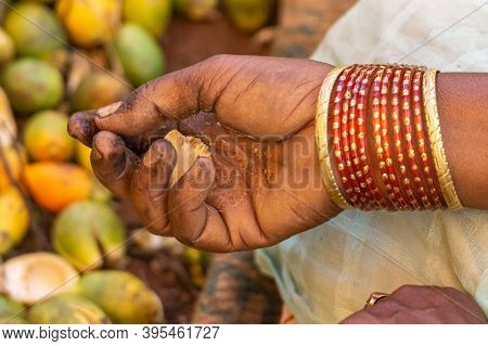 Kadenahalli, Karnataka, India - November 3, 2013: Closeup Of Hand Holding Meat Of Betel Nut With Hea