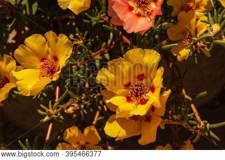 Bright Sun And Yellow Flowers. Yellow Summer Flowers