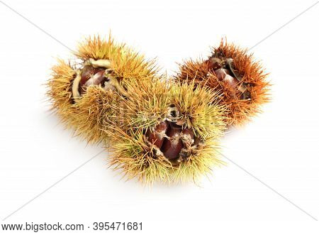 Fresh Sweet Edible Chestnuts In Husk On White Background