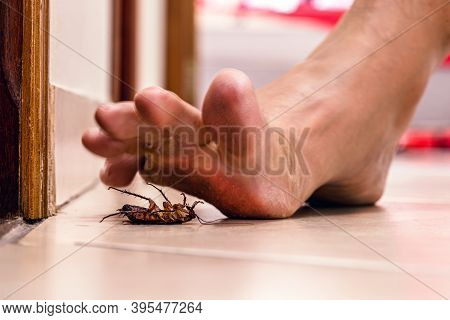 Bare Foot Stepping On Dead Cockroach, Disgusting Scene, Poor Hygiene, Problems With Insects And Pest