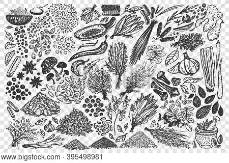 Doodle Set. Collection Of Hand Drawn Different Condiments Herbs Coriander Carnation Ginger Pepper Is