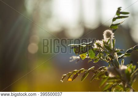 Blurred Image Of Meadow Flowers With Bokeh. Spring Wild Meadow Flowers, Soft Focus. Flowers In The S