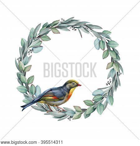 Nightingale Bird On Eucalyptus Wreath Watercolor Illustraton. Hand Drawn Close Up Realistic Song Bir