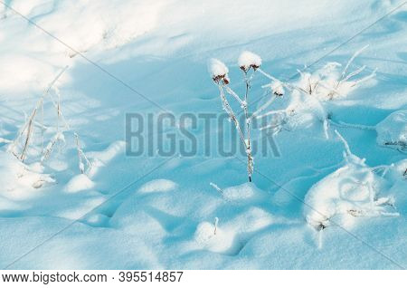 Winter nature landscape, winter field covered with snow and frozen plants on the foreground. Winter nature view