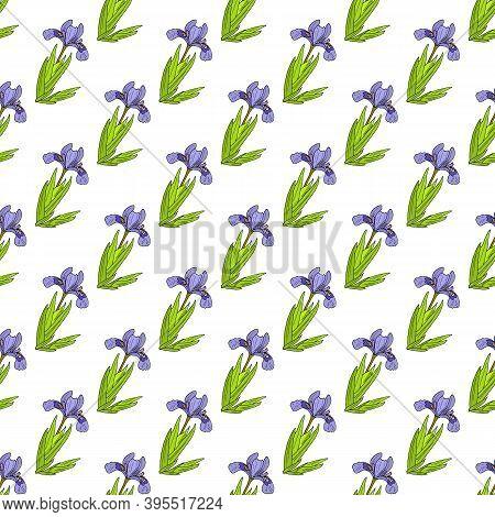 Seamless Pattern With Dwarf Lake Iris. Hand Drawn Botanical Vector Illustration