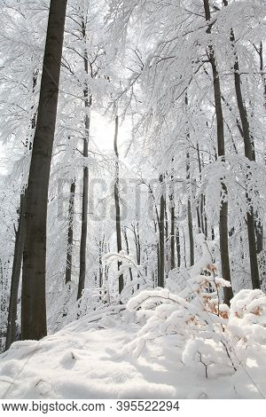 Winter woods forest sunrise Nature morning landscape Nature background Nature landscape snow Nature background landscape Nature landscape Nature landscape Nature landscape trees Nature background landscape Nature background landscape Nature background.