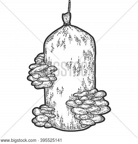 Oyster Mushrooms Grown In Bag. Engraving Vector Illustration. Sketch Scratch Board Imitation.