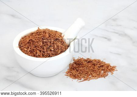 Cats claw bark herb used in herbal medicine to treat viral infections, peptic ulcers, gastritis, hemmorhoids, peptic ulcers and can boost the immune system. Uncaria tomentosa.