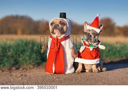 Pair Of Adult And Puppy French Bulldog Dogs Dressed Up With Funny Snowman And Santa Christmas Costum